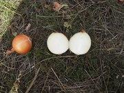 Сельскохозяйственное предприятие ООО «Лиман» предлагает овощи собствен
