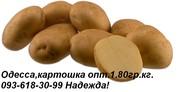 Одесса картошка опт 1.80гр. кг. Звоните 093-618-30-99 Надежда.