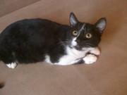 Котенок (мальчик) черного цвета играется кусается светлые глаза