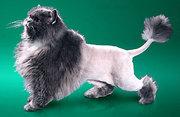 Профессиональная стрижка кошек и собак-от 90 грн.