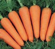 Продам морковь с поля в Одесской обл.!