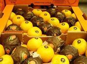 Прямые поставки лимона,  мандарина из Аргентины