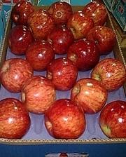 Предлагаем  прямые поставки яблок  Аргентины