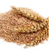 Компания TUREKS купит отруби пшеничные на экспорт.
