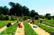 Требуются рабочие на сбор овощей и фруктов в Польшу
