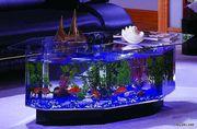 Продажа,  установка,  обслуживание аквариумов!