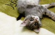 Хороший котенок 4 месяца