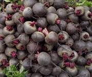 Продам свои овощи до 2500 т - лук,  свекла,  морковь,  капуста в Одесской