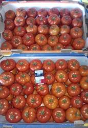 Продам помидор красный крупный и средний в Овидиополе.