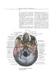 атлас анатомии Синельникова