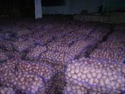 Картофель от Производителя в Одессе.