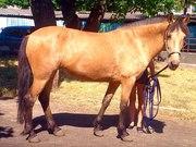 Продам буланную лошадь