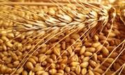 Пшеница 3 кл на экспорт 25 000 т  Одесса. Поставка CIF.
