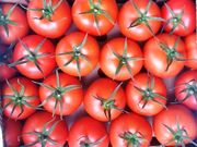 Овощи и Фрукты оптом с Турции , с первых рук