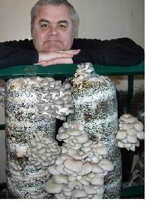 Выращивание грибов у себя дома на даче,  на производстве.