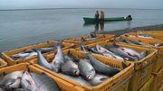 Рыбак-рабочий на рыбзавод