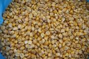 Кукурудза на експорт / Corn for export
