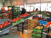 Разнорабочий на овощной завод в Польше