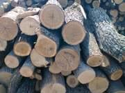 Продам дрова оптом в Одессе.