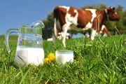 Домашнее коровье молоко (ОПТ)