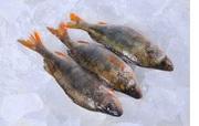 Рыба оптом Украина.