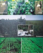 Собственное производство удобрений без химии,  пестицидов,  ГМО.